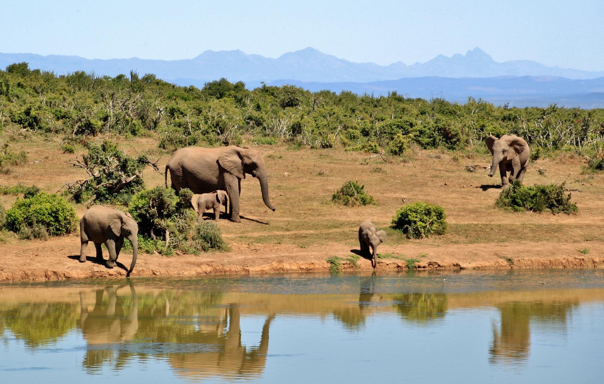 Chobe National Park & Okavango Delta, plus Victoria Falls & Cape Town